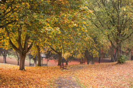 Autumn colours in a park with leaves on the ground