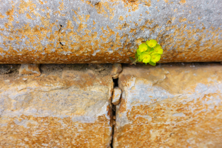 One vibrant green plant with some blossoms grows out of a barren stone wall - symbol for power, accomplishment, confidence, hope, growth - focus on flower, copy-space, landscape orientation