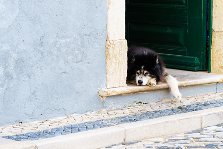 A black and white dog laying at a green open front door with one paw hanging down the threshold, relaxed mood (horizontal landscape format, copy space) Stockfoto