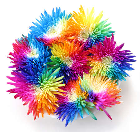 Bouquet of Rainbow multicolored Chrysanthemums on white backround