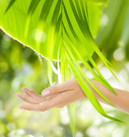 Beautiful Female Hands on the green background of a tropical forests leaves with drops