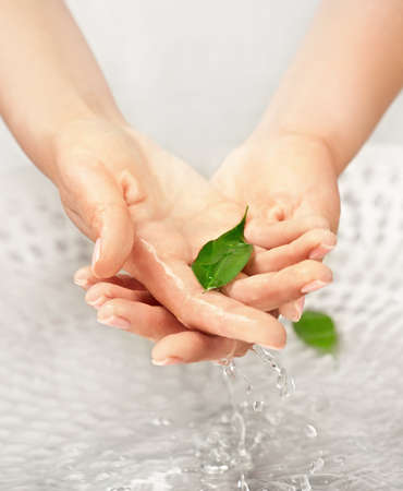 Womans hands with green leaf in water above the sink