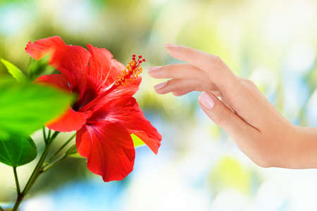 Red flower with womans hand on bokeh tropic background Stock Photo
