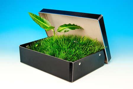 草とカブトムシ ボックスをスプラウトします。 写真素材
