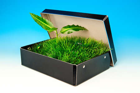 Sprout in the box with grass and beetles