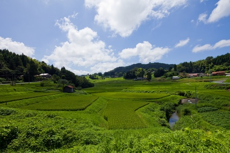 environmental issue: Rice field