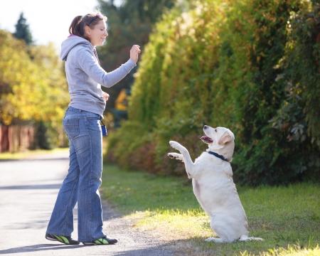 Beautiful woman training dog breed labrador retriever Foto de archivo