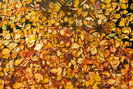 Autumn leaves on water Stock Photo - 22999641