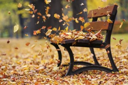 hojas secas: Banco en el parque oto�o Foto de archivo