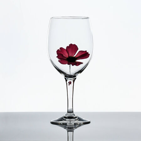 Wine glass with reflection of flower  photo