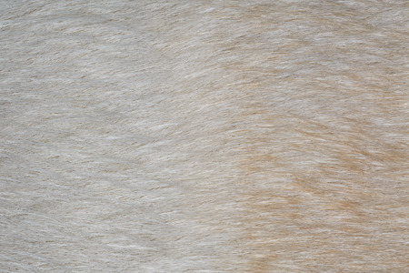 pelage: Close-up dog hair. Small depth of field Stock Photo