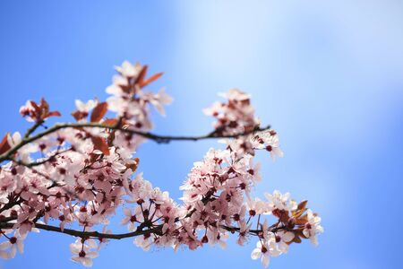 Beautiful spring flowers on a background of blue sky