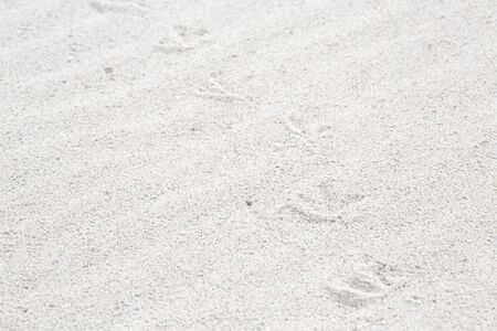 beige background: Traces of birds in the sand on the beach as a background. Small depth of field