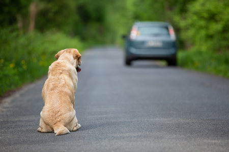 Abandoned dog on the road Imagens