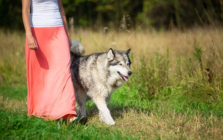 Woman walking with an Alaskan Malamute dog