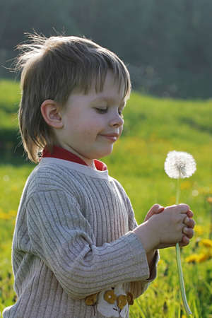 Young boy enjoy summer time in the dandelion meadow. Stock Photo - 7736548