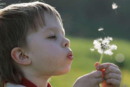 若い男の子は、タンポポの草原の夏の時間をお楽しみください。