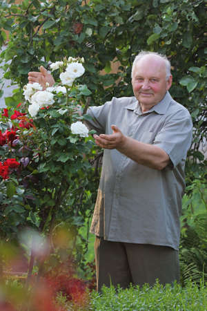 mature men: Old man - grower of roses next to rose bush in his beautiful garden.  Stock Photo