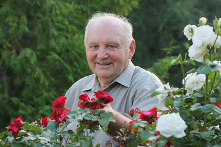 grower: Portrait of old man - grower of roses next to rose bush in his beautiful garden.  Stock Photo