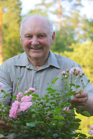 grower: Old man - grower of roses next to rose bush in his beautiful garden.  Stock Photo