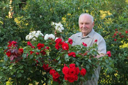 老人は-彼の美しい庭のバラの茂みの横にあるバラの栽培者。 写真素材