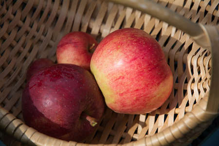 Some red apples in the basket. Ripe red apples in the basket on the green grass. 版權商用圖片