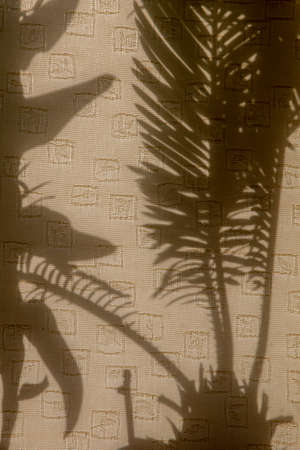 Curtains with silhouettes of houseplants. Abstract background. Shadow is dark area produced by object coming between rays of light and  surface. Stockfoto