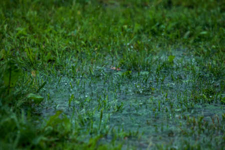 Summer thunderstorm rain refreshing nature meadow. Background with rain drops in meadow. Rain is condensed moisture of the atmosphere falling visibly in separate drops.