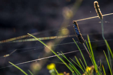 Grass with spider web. Grass on the background of river. Closeup of green grass. Spider web on a green grass. Meadow with spider web. Nature grass near the river in Latvia. Abstract background of green grass and river.