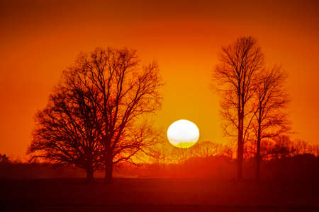 Silhouette of trees in sunset. Trees at sunset. Beautiful spring landscape in Latvia. Beautiful landcape of trees with sunset twilight background. Red orange light on sunset sky over the trees. 스톡 콘텐츠 - 114961520