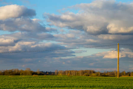 Green field with cereal and trees on the back, against a blue sky. Spring landscape with cornfield, wood and cloudy blue sky. Classic rural landscape in Latvia. Imagens