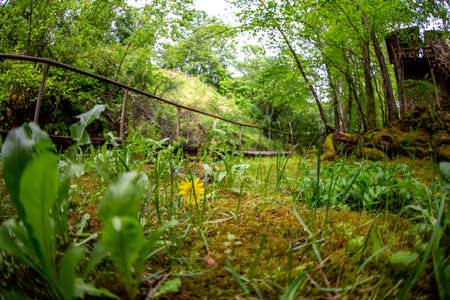 Moss covered forest with wooden bridge and old mill in background. Forest park with wooden bridge in Latvia. Shot with fisheye lens. Stock Photo