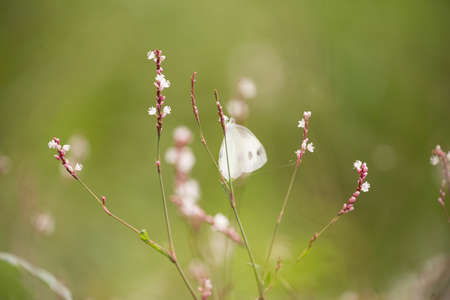 Butterfly - Insect, Springtime, Summer, Meadow, Field