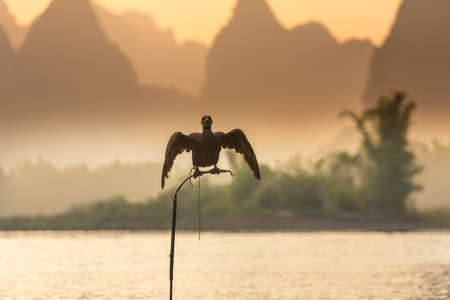 Cormorant, Double Crested Cormorant, Animal, Animal Wildlife, Bird