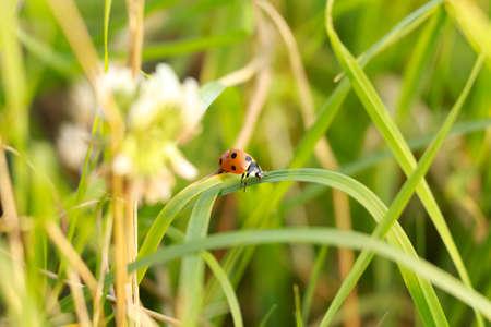 Ladybug on grass Banco de Imagens