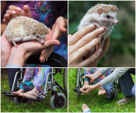 disablement: set. young girl in a wheelchair holding a hedgehog