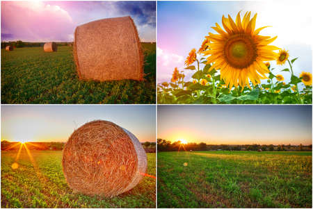 collage of stacks of hay and fields of sunflowers