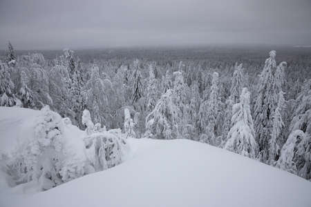 snow coniferous trees in the mountains of the Urals on top of mount aigir on the background of mountains in winter Фото со стока