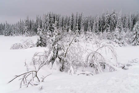 Winter forest with white snow in Lapland in the evening Фото со стока