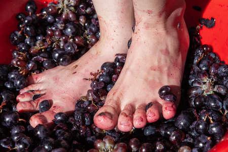 Woman crushes feet of grapes to make wine Фото со стока