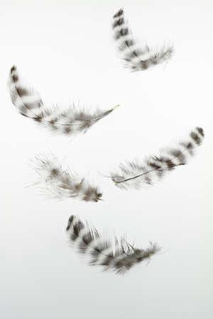 Pięciu piór łatwe przestawne w powietrzu.