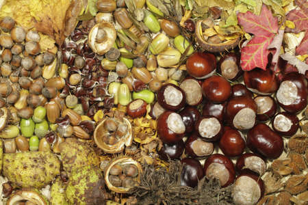 Colorful chestnuts, acorns, beechnuts and decorative leaves lie side by side. photo