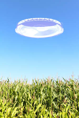 A bright UFO hovering in the blue sky over a cornfield  photo