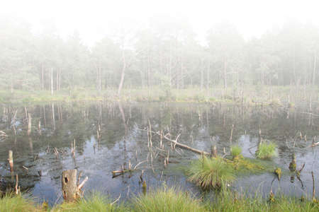 The Moor s habitat in which many animals and plants are native  photo