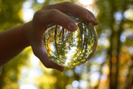 A crystal ball is held by one hand in the forest. Stock Photo