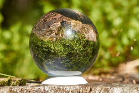 clairvoyant: A crystal ball is in the sun on a tree stump.