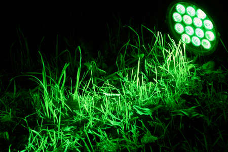 leds: A bright green LED lamp lights up a meadow.
