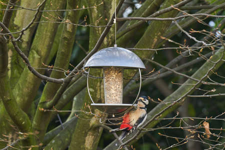 A bird feeder with a birds hangs from a tree, where a variety of birds can be found. Stock Photo