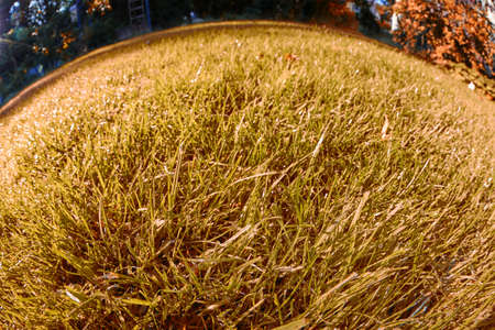 Wide shot of a meadow with thousands of blades of grass.