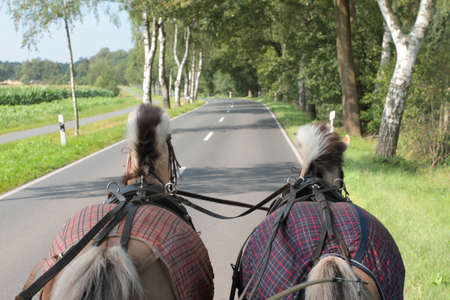 Two horses pulling a carriage over a country road. Stock Photo